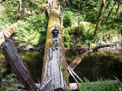 Tree bridge over the Nestucca River