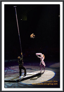 The same cat jumped from top of a long pole.
