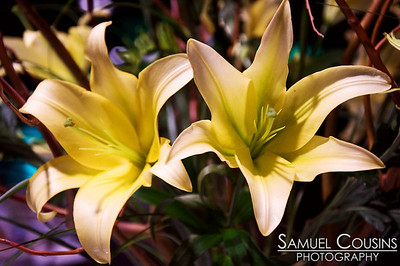 Lillies at the Velvet Gala
