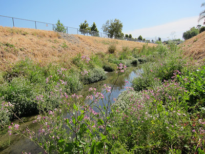 Wildflowers along the creek.
