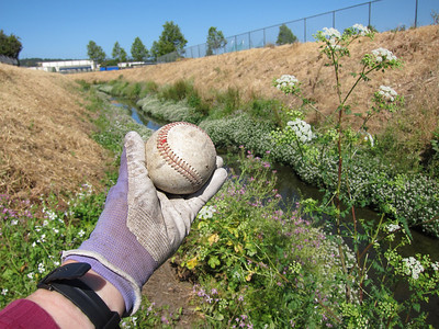 Another ball, a baseball this time. Found another one shortly thereafter. The guy following behind me found a couple more. (There is a school athletic field alongside the creek.)