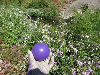 A large, lightweight, purple plastic ball. It's just a ball kind of day!