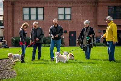 Rocketts Dogs-015