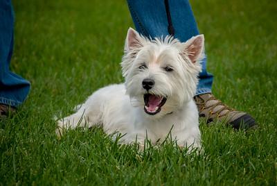 Rocketts Dogs-049