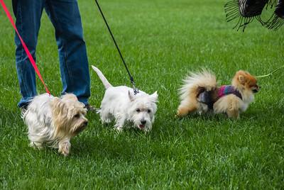 Rocketts Dogs-019