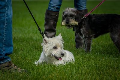 Rocketts Dogs-032