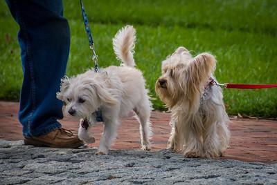 Rocketts Dogs-024