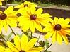 Rockport flowers
