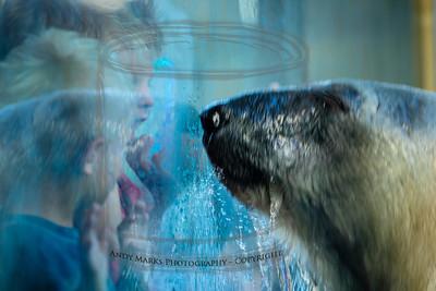 P.Bear gets the glass a bit wet.