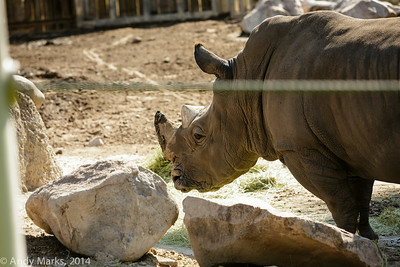 what sort of enrichment might this rhino enjoy?