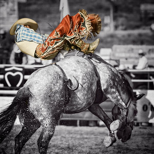 Bucking Bronco 1BW FINAL