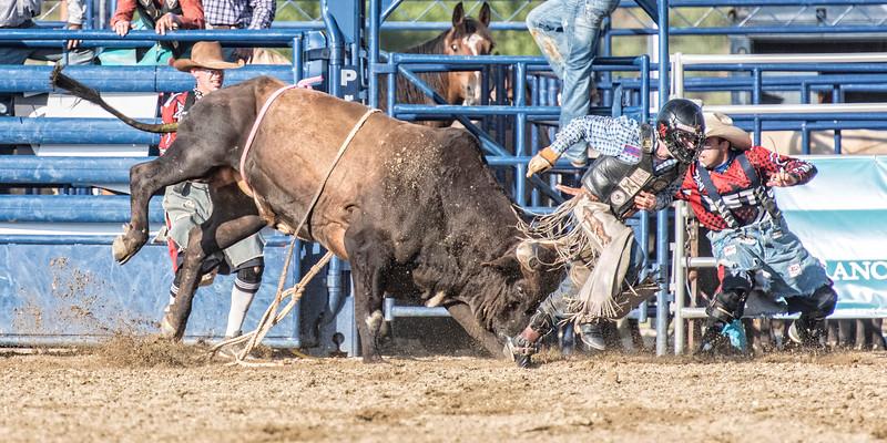 Bull 10_DSC4584 copy