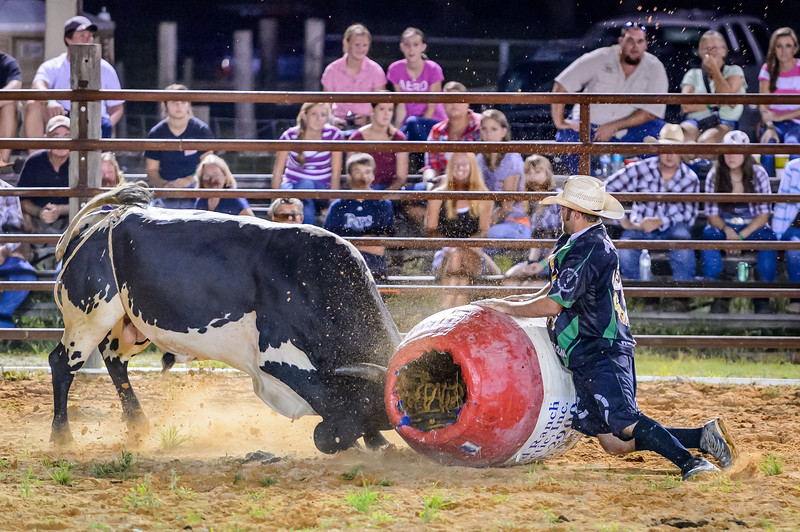 This bull was reluctant to leave the ring