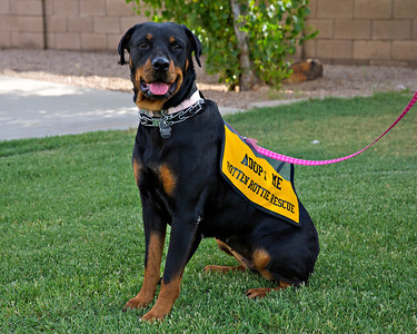 Rotten Rottie Rescue Events