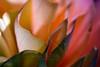 Breathe<br /> <br /> Flower pictured :: Ranunculus<br /> <br /> Flower provided by :: Babylon Floral<br /> <br /> 012614_003293 ICC sRGB 16x24 pic