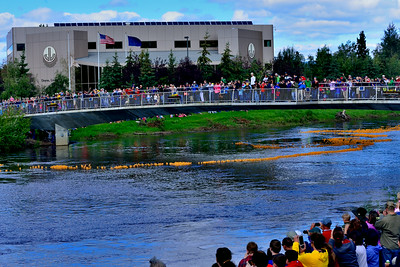 """Rubber duckies, racing to the finish line. This event was part of Fairbanks' """"Golden Days"""" celebrations."""