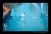 DSC_6505-12x18-06_2014- CR-Blue-W