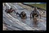 DS7_9131-12x18-06_2014-Mud_Run-W