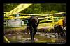 DSC_8779-12x18-06_2014-Mud_Run-W