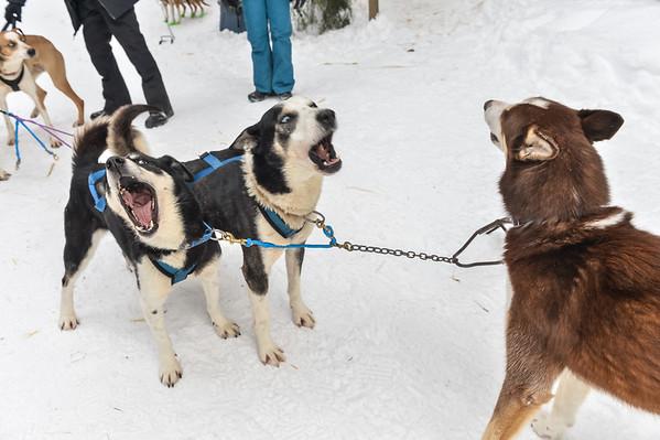 Feb8_Dog-018