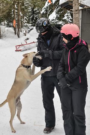 Feb8_Dog-006