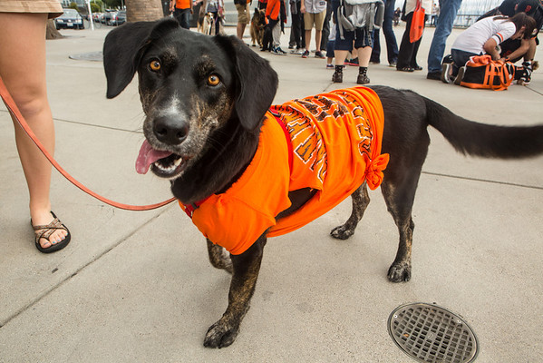 SF Giants Dog Day 2013