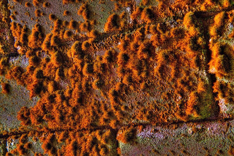 Fort Point Lichen 2