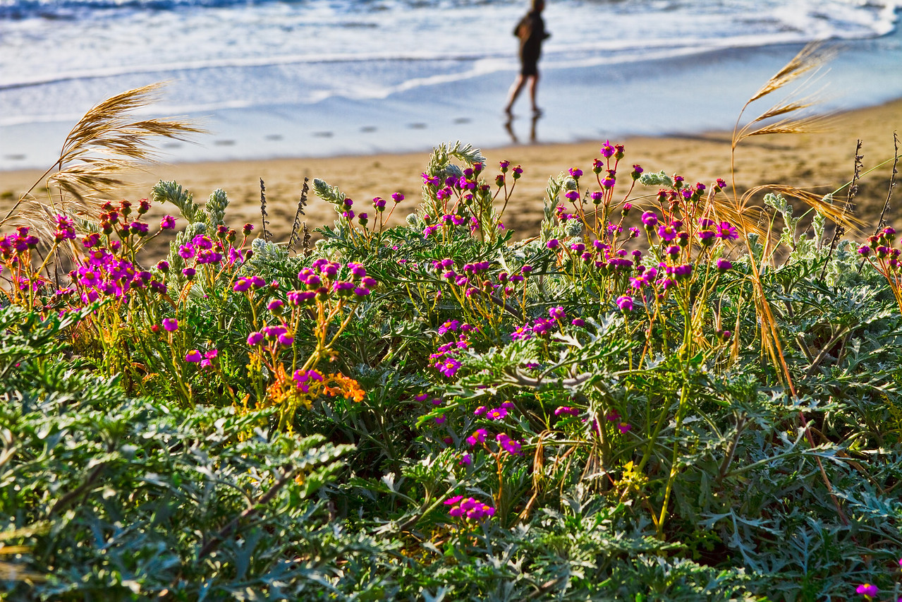 Baker Beach Wildflowers