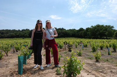 Co-pilots in a Chateauneuf du Pape vineyard.