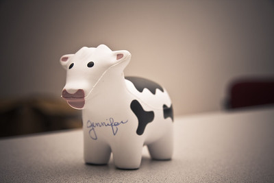 Jennifer of SharePoint 911 signed one of Shanes Cows.