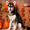PV_SWM_Halloween_13