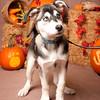 PV_SWM_Halloween_16