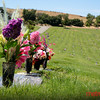Oak Hill Memorial Park ~ San Jose Ca
