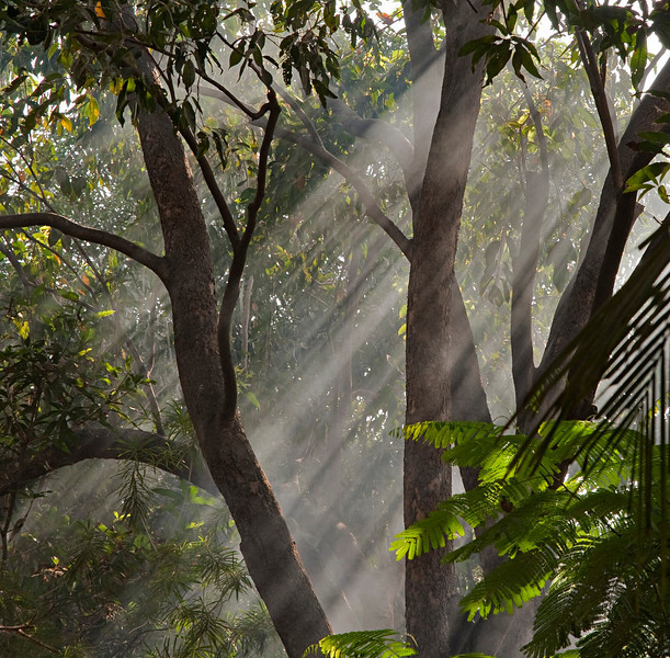 Let there be light...<br /> Trees in the Om garden at the back.
