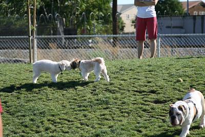 Sadie's Meetup - Reed Park