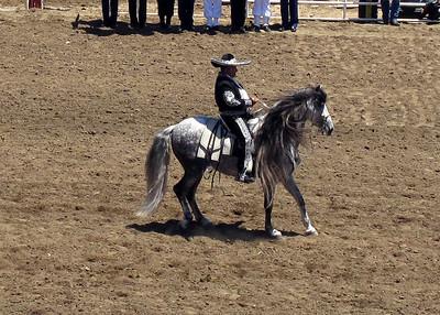 Z Salinas Rodeo