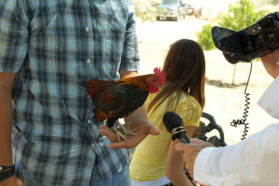 Summer Salsa Contest at Quail Hollow Farm CSA Moapa Valley community supported agriculture offering the freshest grown produce grown locally to serve the community. For a weekly basket of organic vegetables, fruits, herbs, milk, cheese, flowers delivered to your home Contact Laura and Monty Bledsoe at 702-397-2021 Email quailhollowfarm@mvdsl.com Visit Quail Hollow Farm website www.quailhollowfarmcsa.com Photographs in this public online gallery free downloads for Quail Hollow Farm by Mark Bowers of ReallyVegasPhoto.com
