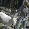 Record-Eagle/Lisa Perkins<br /> Logen Poniatoski tries to persuade Bella the goat to return to the barn.