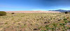 The Great Sand Dunes 3