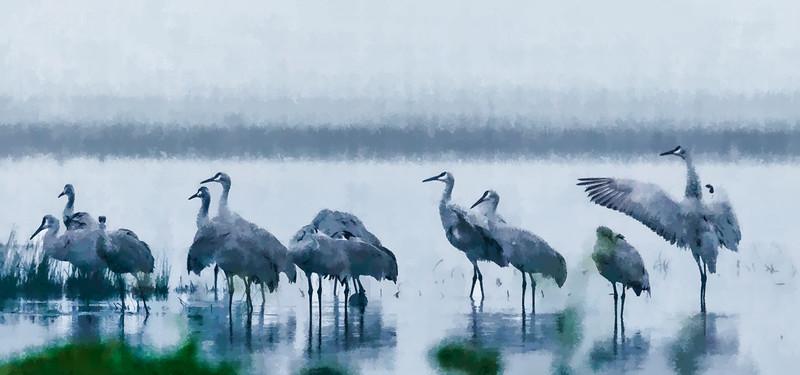 Woodbridge Sandhill Cranes_Awoken