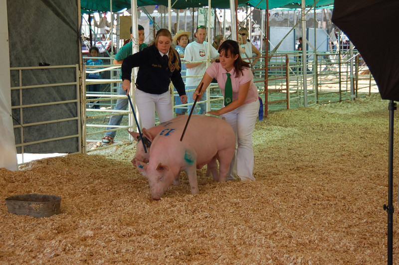 Sometimes the stick wasn't enough; a 300-lb hog really goes where he wants to go.