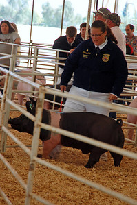 The kids guide the pigs into the area between the audience/bidders and the auctioneers and walk them back and forth so the buyers can evaluate the quality of their meat.
