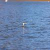 Santa Margarita Lake_018