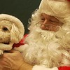 Record-Eagle/Garret Leiva<br /> Otis Ripley, a 3-year-old toy poodle, dresses up in the spirt of the season as he visits Santa.