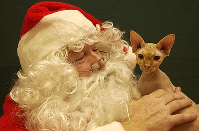 Record-Eagle/Garret Leiva<br /> Kissy No Fur, a hairless sphinx cat, finds a warm spot among Santa's beard.