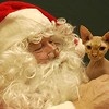 Record-Eagle/Garret Leiva Kissy No Fur, a hairless sphinx cat, finds a warm spot among Santa's beard.