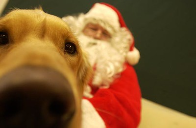 Record-Eagle/Garret Leiva Champ, a 1 ½-year-old golden retriever, isn't remotely camera shy about getting his photo taken with Santa Claus.