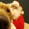 Record-Eagle/Garret Leiva<br /> Champ, a 1 ½-year-old golden retriever, isn't remotely camera shy about getting his photo taken with Santa Claus.