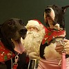 Record-Eagle/Garret Leiva<br /> Tea, 4, and Howie, 4, prove that even a Great Dane can be lap dogs as they pose for a photo with Santa.