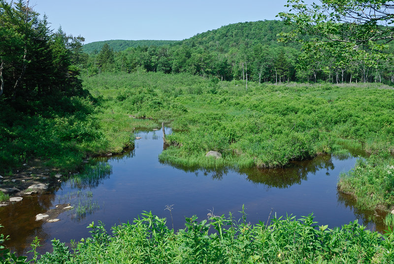 <b>Tower Swamp</b>   (Jul 03, 2006, 10:18am)